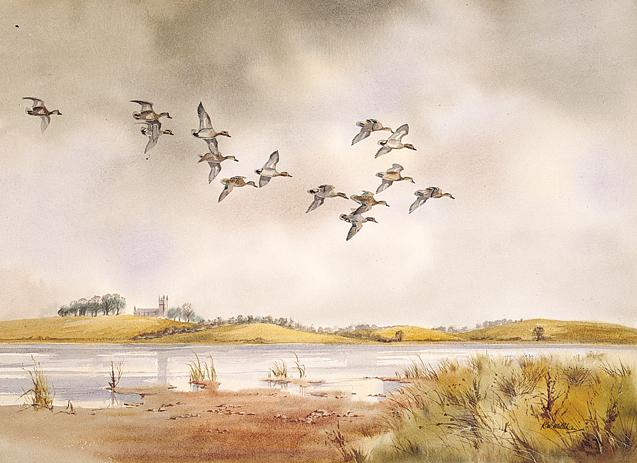 Teal in the Downpatrick Marshes (Drawing)